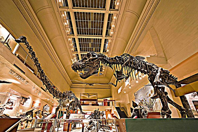 Before construction: The Dinosaur Hall at the Smithsonian's National Museum of Natural History